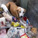 Mother Dog Bleeding From Glass Gets Rescued!