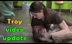 Troy – video update (Make sure to check out the video of his rescue – link below).