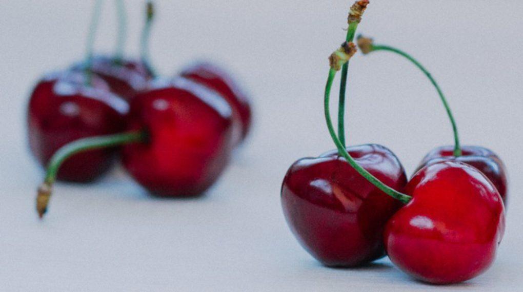 can dogs eat bing cherries