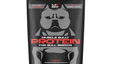 protein for pibulls