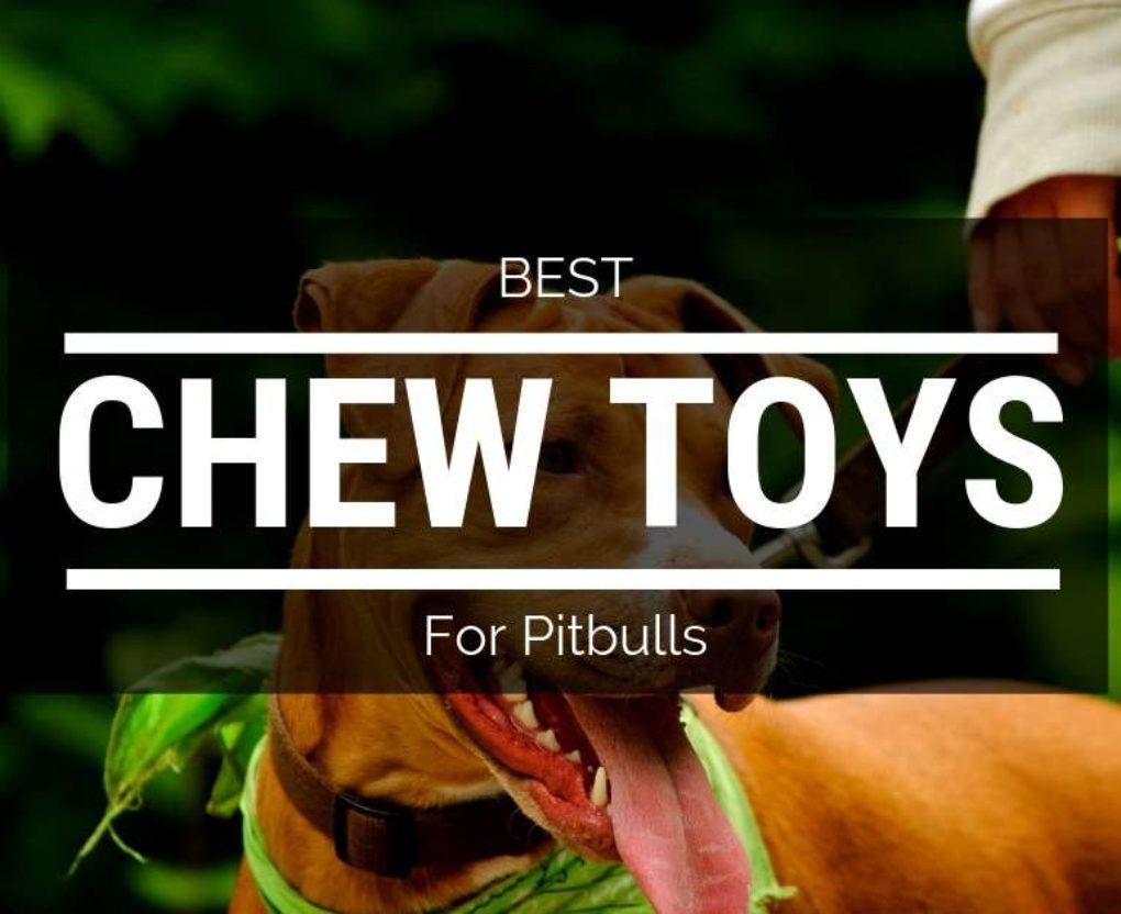 best chew toys for pitbulls
