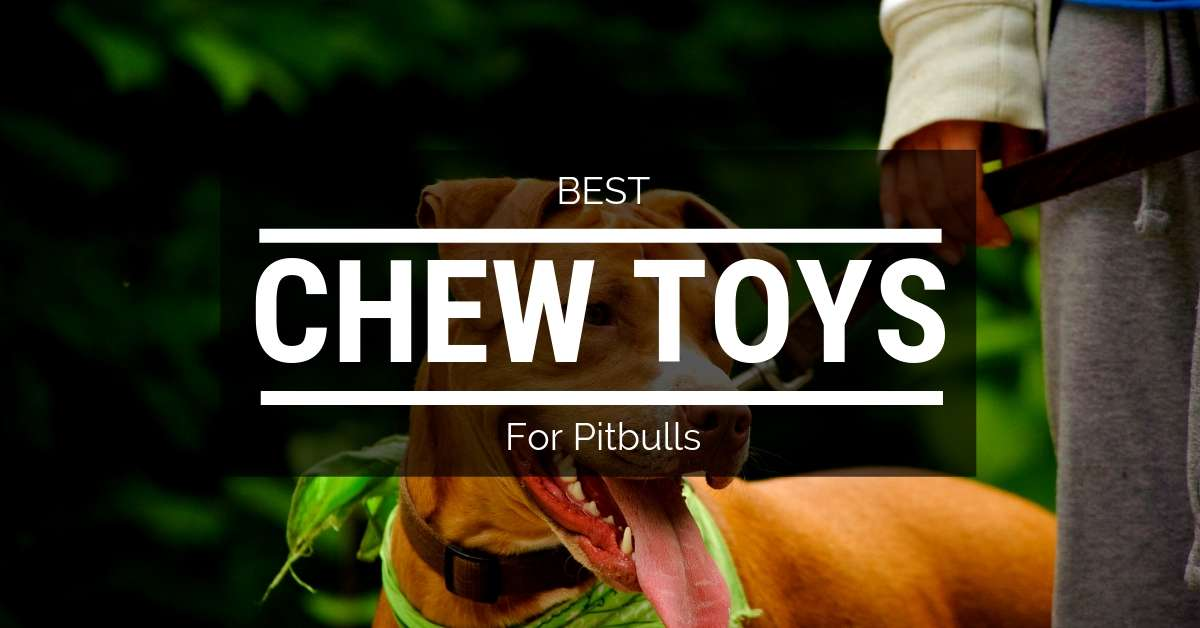 5 Chew Toys For Pitbulls