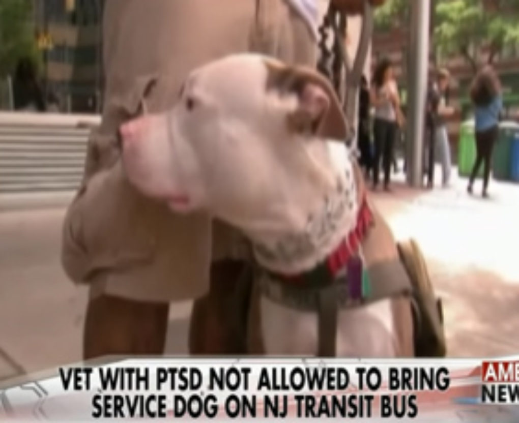 service pit bull denied access on new jersey city bus fi