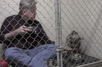 stray pit bull taken in by veterinarian who took extreme measures to heal her fi