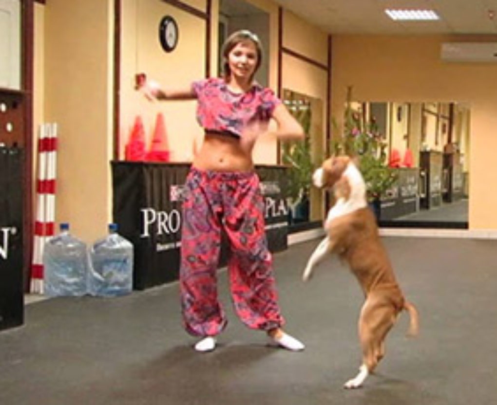 pit bull and owner flawlessly pulls off bollywood dance routine FI