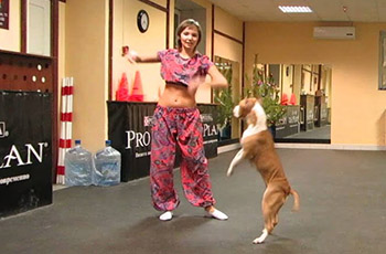 Pit bull and owner flawlessly pulls off Bollywood dance routine.